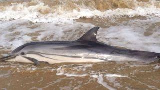 Il delfino trovato sull'arenile