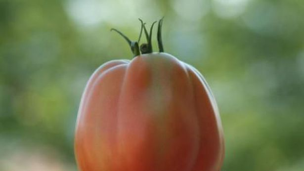 Pomodoro a pera