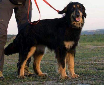 Il cane utilizzato nelle ricerche
